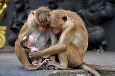 I hate monkeys, primates, chimps and apes! Nature Animals, Animals And Pets, Beautiful Creatures, Animals Beautiful, Cute Baby Animals, Funny Animals, Photo Animaliere, Tier Fotos, Cute Animal Pictures