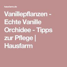 vanillepflanzen echte vanille orchidee tipps zur pflege hausfarm pflanzen pinterest. Black Bedroom Furniture Sets. Home Design Ideas