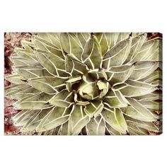 Shop for Oliver Gal 'Cactus Flower' Floral and Botanical Wall Art Canvas Print - Green, White. Get free delivery On EVERYTHING* Overstock - Your Online Art Gallery Store! Canvas Art Prints, Painting Prints, Canvas Wall Art, Fine Art Prints, Flower Graphic, Graphic Art, Oliver Gal Art, Flower Canvas, Flower Wall