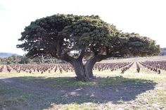 arbre extraordinaire - Recherche Google