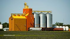 U.S. Court rules that biotech corporations can't force grain elevator companies to accept GMOs