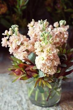 Floral Arrangement ~ Palest peach stock flowers (Matthiola), with leucadendrons, at Flaming Petal. Peach Flowers, Fresh Flowers, Beautiful Flowers, Small Flowers, Stock Flower, My Flower, Ikebana, Bouquet Champetre, Buddha