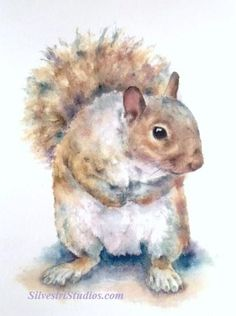 My squirrel watercolor is available as a cute art print and greeting cards. Woodland animal prints are perfect for wildlife art lovers, in addition to nursery decor and wall art! To view more animal art by Teresa Silvestri, visit www.SilvestriStudios.com (Photo reference thanks to Lesley Hughes)