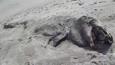 Mysterious Sea Monster washes up in New Zealand