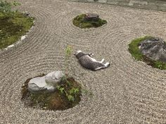 Cat sleeping in a Zen Garden
