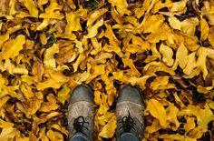 Herbst - meine liebste Jahreszeit...