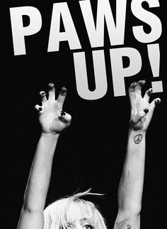 Put your paws up!