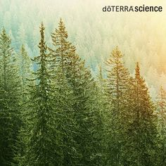 doTERRA Science  The scent of a freshly trimmed holiday tree is something many people look forward to. But did you know that some trees emit essential oil constituents?   #doterrascience  http://ift.tt/2iga1dW