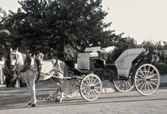 Traditional horse & carridge, ideal for weddings in Nerja