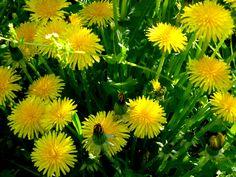 Kliešte o vás stratia záujem - Zdravieastyl.sk Korn, Plants, Medicine, Planters, Plant, Planting, Grains, Planets