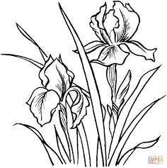 Irises | Super Coloring
