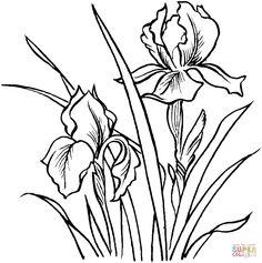 Irises | Super Coloring