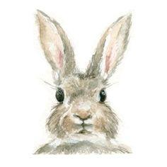 Watercolor Rabbit, Rabbit Print, Bunny Print, Animal Print, Rabbit, Jackrabbit by jenhollowayart (11.00 USD) http://ift.tt/20r8Vtp