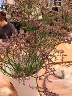 Limoneum til ballettkjørt Flowers, Plants, Plant, Royal Icing Flowers, Flower, Florals, Floral, Planets, Blossoms