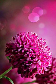Fleur rebelle
