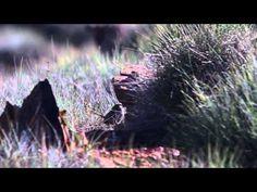 Australia's National Landscapes Nature Series - Flinders Ranges - Peter Waanders