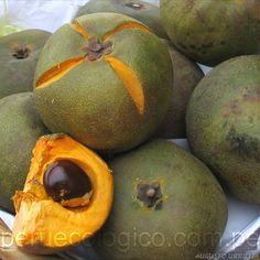 Lúcuma (Pouteria lucuma) is a subtropical fruit native to the Andean valleys of Peru.
