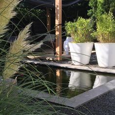 ▪️SUN IS BACK!▪️  Eindelijk weer eens lekker naar buiten vandaag!  En wat ziet alles er meteen weer mooi uit als de zon schijnt!   Geniet ervan! X  #garden #gardenlife #instagarden #instagardenlovers #sunnyday #vijver #pampas #pampasgrass