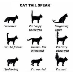 How Cats Talk with their Tail