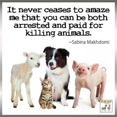 illogical: it never ceases to amaze me that you can be both arrested and paid for killing animals ~ courtesy Sabina Makhdomi #vegan #logic