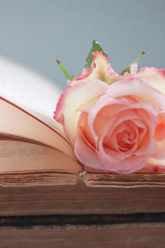 Beautiful Rose on a Vintage Book
