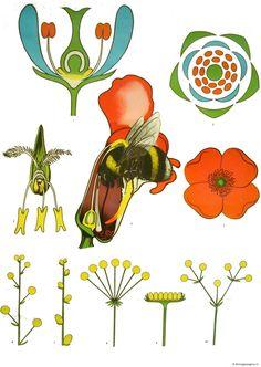 Bestuiving door bijen Bee Crafts, Arts And Crafts, Biology Lessons, Zentangle Patterns, Fauna, Great Stories, Botanical Illustration, Amazing Nature, Botany