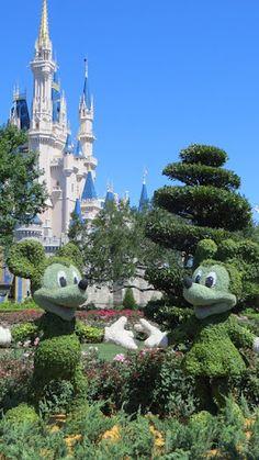 Disney Magic Kingdom - Day 2 Favorite Kingdom