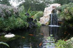 A Koi Pond Mark built.