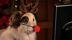 pictures of stan from dog with a blog | Dog With a Blog - Stan Learns True Meaning of the Holidays - BSCkids