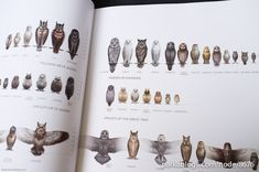 The Art of The Legends of the Guardians: The Owls of Ga'hoole - 02