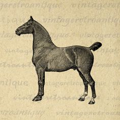 Digital Printable Coach Horse Graphic by VintageRetroAntique Clip Art, Vintage Artwork, Horse Art, Graphic Illustration, Digital Illustration, Digital Image, Lovers Art, Paper Art, Vintage Clip