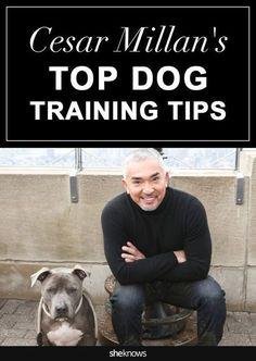 Cesar Millan spills some of his best secrets for training your furry friend Pet Accessories, Dog Toys, Cat Toys, Pet Tricks