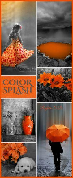 Black w Orange color splash