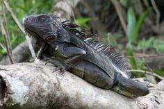 Reptiles, Amphibians, Lizards, Let's Have Fun, Mother Nature, Creepy, Charcoal, Wildlife, Creatures