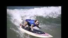 R.I.P., Tillman the skateboarding dog