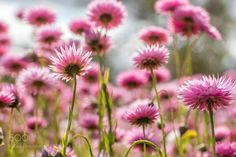 Pink by bmkphotography. @go4fotos