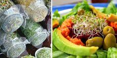 Propiedades y beneficios de los germinados, y cómo crecerlos