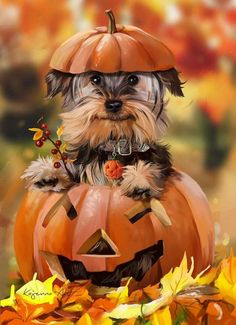 Today we are going to share Best Halloween Day wishes ideas for All. As we know that Halloween comes in the month of October. So, today we are collected Latest Best wishes Halloween ideas for All. Chien Halloween, Fröhliches Halloween, Cute Puppies, Cute Dogs, Dogs And Puppies, Yorkies, Yorshire Terrier, Funny Animals, Cute Animals