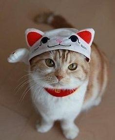Disfraz de gato para gatos
