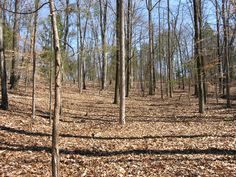 6.16 acre wooded lot in The Sanctuary, Charlotte
