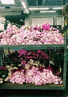Acúmulo de flores