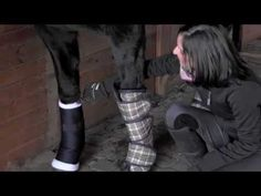 ▶ Everything You Need to Trailer Your Horse - brought to you by Greenhawk   www.greenhawk.com
