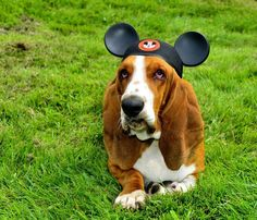 Basset Mouse.. Cutest thing ever!!! <3 <3 <3