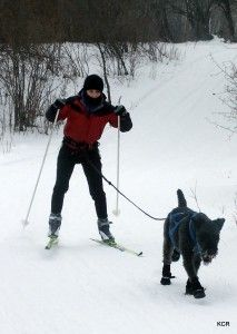 getting-started-in-skijoring-1