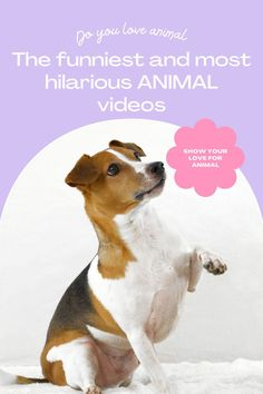 Top 10 Cutest funny animal — Small Cutest animal We Can't Get Enough Of Companion Dog Excellent. follow me for more! #dog #dogs #pet #doglover #doggy #puppy #puppies #puppys #dogoftheday #doglove #dogphotography #dogvideos #dogvideo dog, dogs, doglover Trimming Dog Nails, Dog Health Tips, Cat Health, Health Advice, Health Care, Itchy Dog, Dog Fails, Dog Grooming Tips, Basic Dog Training