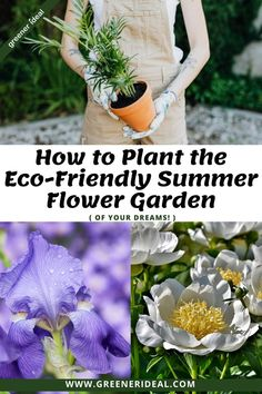 Eco-friendly summer gardening is one of the most enjoyable and rewarding types of gardening, but sometimes it's hard to know where to start. By picking the right summer flowers to brighten up your backyard, you'll be able to empower yourself to have the most vibrant summer garden possible. Check out these five of the best Eco-conscious full sun perennial flowers that will withstand the intense summer heat. #gardentips #flowergardening #gardening #summergardening #flower #growingflower #summer