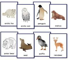 Animal Themed Teaching Resources - Primary Treasure Chest - Animal Themed Teaching Resources – Primary Treasure Chest Printable letter-sized posters of polar animals Polo Sul, Polo Norte, Animal Activities, Preschool Activities, Artic Animals, Penguins And Polar Bears, Poster S, Animal Posters, Winter Theme
