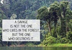 """Who's the savage in this forest? The indigene, or the forest """"industry""""? Thanks for this great photoon from The Pieces Fit, Moms Clean Air Force! Save Our Earth, Mother Earth, Mother Nature, That Way, Climate Change, Wise Words, Me Quotes, Nature Quotes, Quotable Quotes"""