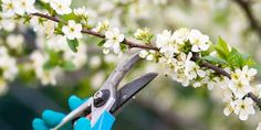 We polled our go-to garden experts for their hardy and inexpensive annuals, perennials, shrubs, and trees. Types Of Roses, Types Of Plants, Petunias, Best Perennials For Shade, Pruning Shrubs, Garden Tool Set, Garden Ideas, Patio Ideas, Outdoor Ideas