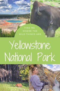 In Yellowstone National Park, I stood silently still at the forest's edge just a mere hundred feet away from the wolf's illuminating eyes and shining black coat.  I peered into her soul, unafraid and invited.  We were connecting and nothing else mattered in that moment in time…. #nationalparks #usatravel #wildlife #traveldestinations #travelguide #northamericatravel #findyourpark #wildlifephotography #naturelovers #travelphotography